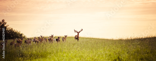 Photo Herd of fallow deer running on forest glade