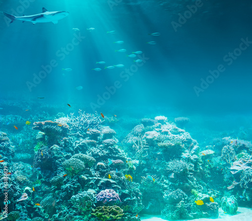 Poster Coral reefs Sea or ocean underwater coral reef with shark
