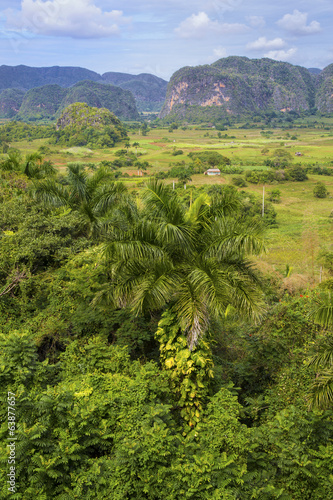 Poster Natuur Island of Cuba