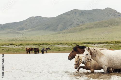 Fotografie, Obraz  Horse herd on the pasture