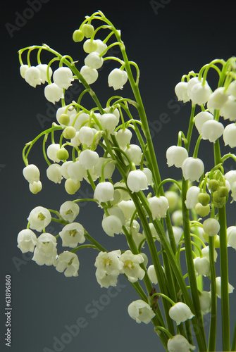 In de dag Lelietje van dalen Detail of Lily of the valley flower