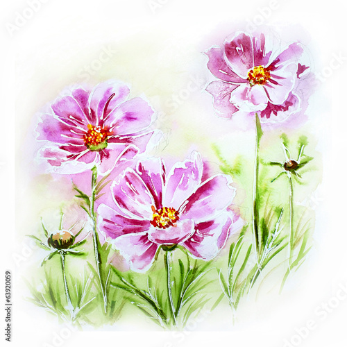 Painted watercolor card with cosmos flowers