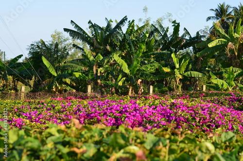 Flora di Cuba Canvas Print