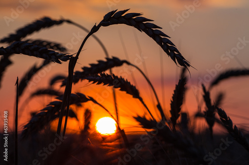 Foto op Canvas Geel Grass Silhouette Against Sunset