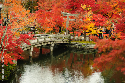 Canvas Prints Japan Autumn foliage at Eikando Temple in Kyoto, Japan