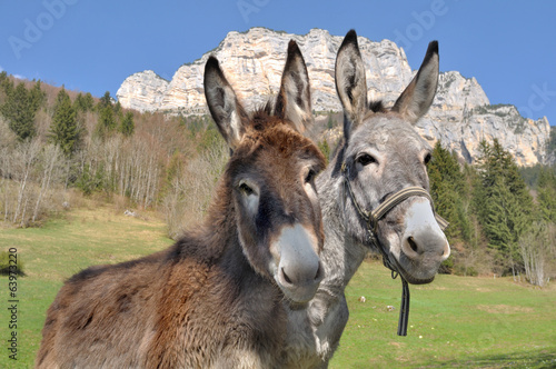 Poster Ezel portraits d'ânes devant montagne