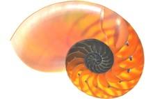 Nautilus Shell Isolated On Whi...