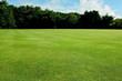 Green short cut grass sport field background