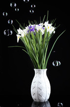 Beautiful Irises On Black Back...