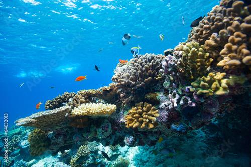 Foto op Plexiglas Koraalriffen Coral reef underwater
