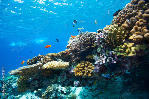 Tuinposter Koraalriffen Coral reef underwater