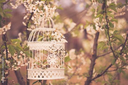 Fényképezés  bird cage - romantic decor