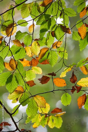 jesienne-liscie-w-lesie