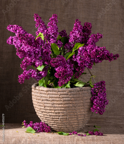 Blooming branches of lilac
