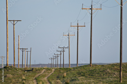 Fotografie, Obraz  Utility Poles Standing in the Desert