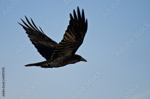 Fotografie, Obraz  Common Raven Flying in a Blue Sky