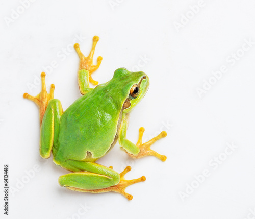 Photo  Green frog