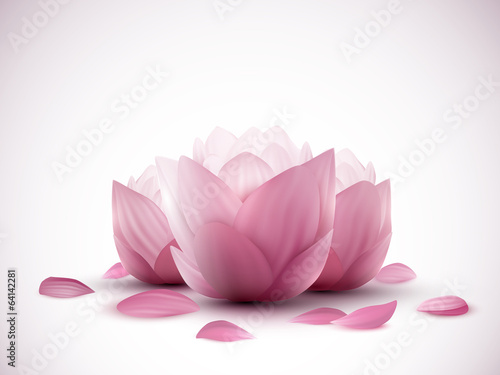 Photographie  vector lotus flowers