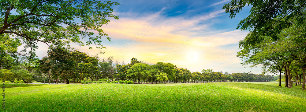 Fototapety, obrazy: Tree in golf course