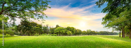 Photo Stands Meadow Tree in golf course