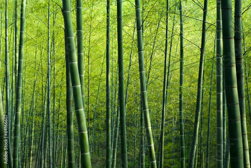 La pose en embrasure Bamboo Bamboo Forest