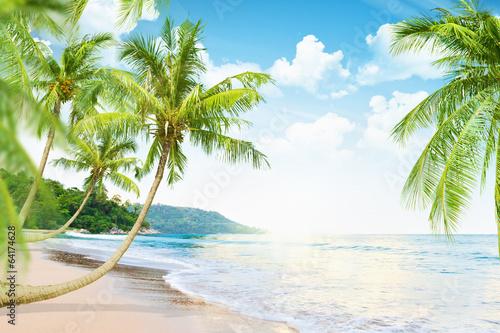 Papiers peints Plage Beach with palm trees