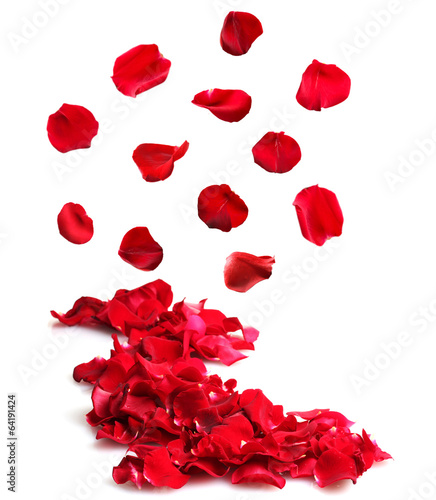 Beautiful petals of red roses isolated on white