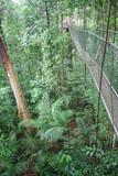 Fototapeta Fototapety mosty linowy / wiszący - Most linowy w dżungli