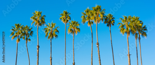 Cadres-photo bureau Palmier A row of palm trees with a sky blue background