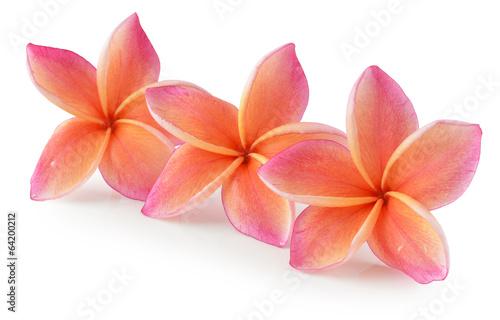 pomaranczowe-kwiaty-plumerii-na-bialym-tle