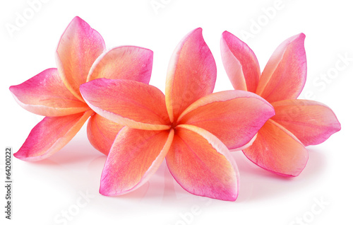 Tuinposter Frangipani colorful plumeria flower isolated on white