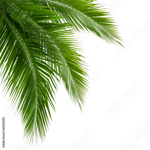 Foto auf Gartenposter Palms Leaves of coconut tree isolated on white background, clipping pa
