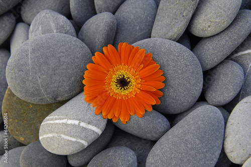 Top view orange gerbera on pebbles