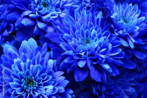 plakat Makro niebieski kwiat aster