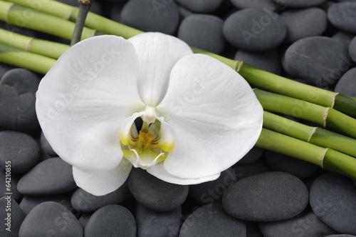 biala-orchidea-i-cienkie-bambusowe-lodygi-na-tle-z-gladkich-szarych-kamieni