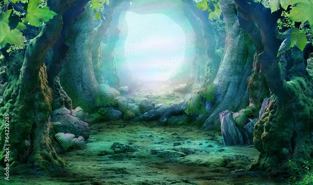 Fototapeta romantic forest view