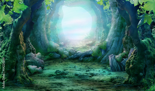 romantyczny-widok-na-las