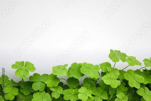 clover background