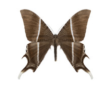 Tropical Butterfly Collection Lyssa Zampa
