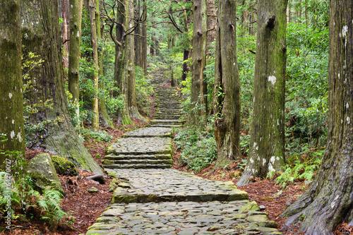 obraz lub plakat Kumano Kodo, Sacred Trail w Wakayama w Japonii