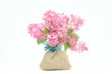 Fototapeta Kwiaty - różowe kwiaty