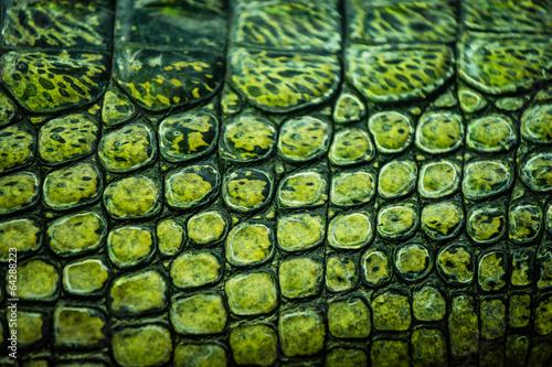 Carta da parati Detail of green gharial skin
