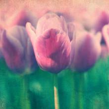 Vintage Tulips Grunge