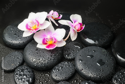 Spa concept with pink with red orchid (mini phalaenopsis) flower