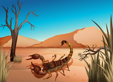 A Desert With A Scorpion
