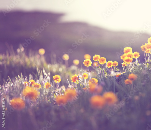 sloneczna-laka-z-czerwonymi-kwiatkami-utrzymana-w-kolorystyce-z-stylu-retro