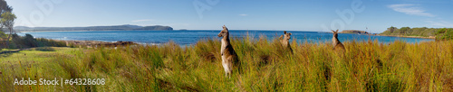 Poster Australie kangaroos on watch at an australian beach