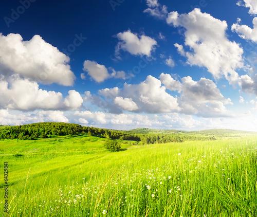 In de dag Lime groen Grassland in summer time.