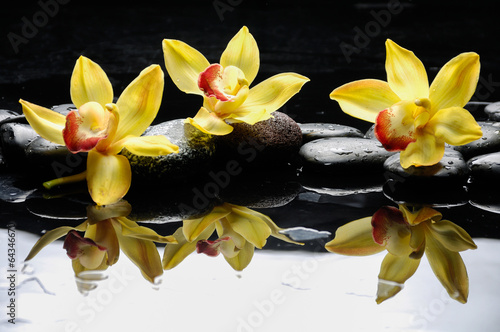still life with three orchid on pebble