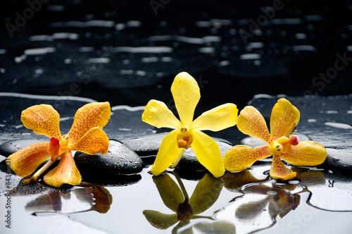 koncepcja-spa-zolte-orchidee-na-mokrych-czarnych-kamieniach-bazaltowych